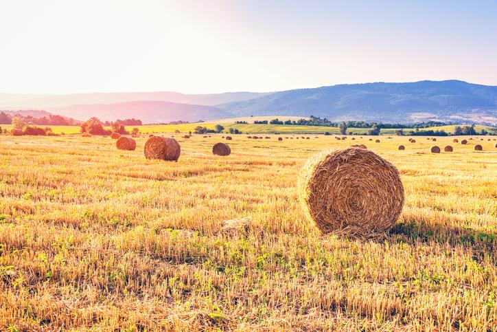 New project: Regenerative farming